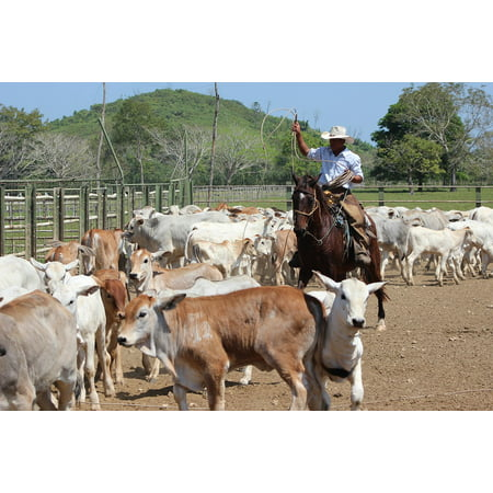 - LAMINATED POSTER Horse Work Field Livestock Peasant Worker Poster Print 24 x 36