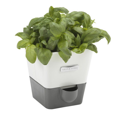 Cole Mason Indoor Herb Garden Self Watering Carbon Steel Pot