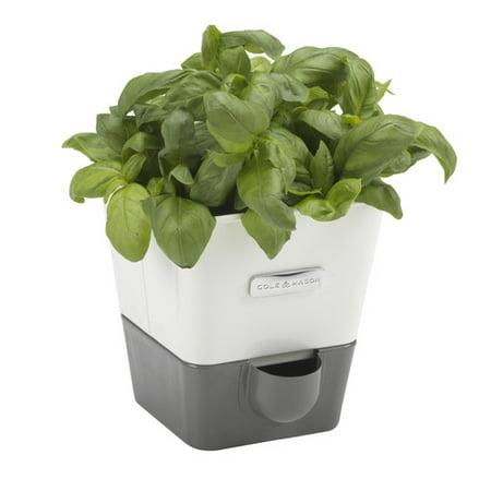 Cole Mason Indoor Herb Garden Self Watering Carbon Steel Pot