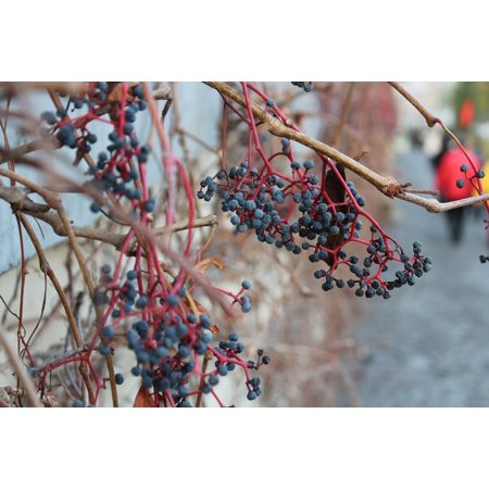 Canvas Print Branches Nature Vine Autumn Blueberries Plants Stretched Canvas 10 x