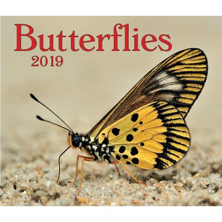 Butterflies 2019 (Other)