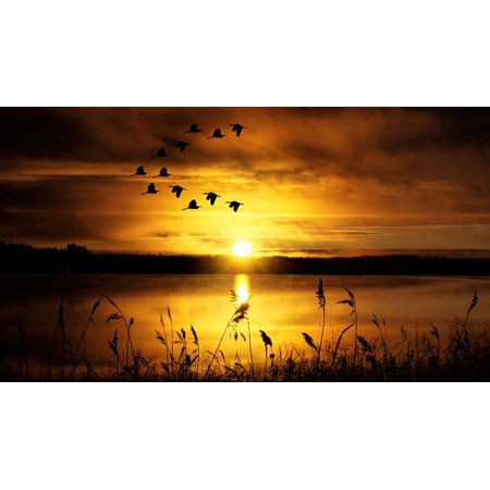 Bird Large Poster - LAMINATED POSTER Slihouette Abendstimmung Birds Lake Sky Sunset Poster Print 24 x 36