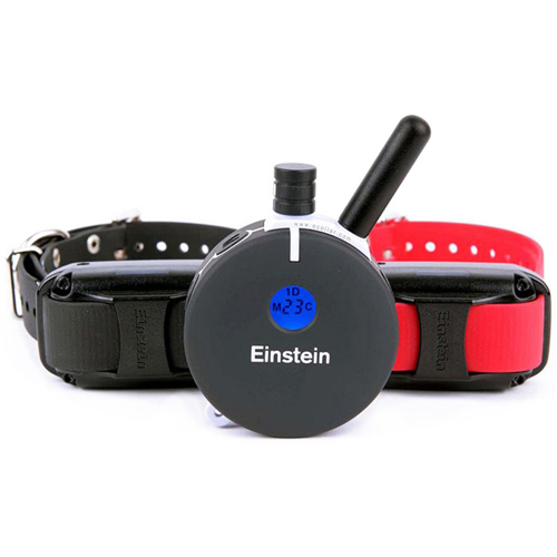 E-Collar Technologies Einstein ET-802A 2 Big Dog Remote T...
