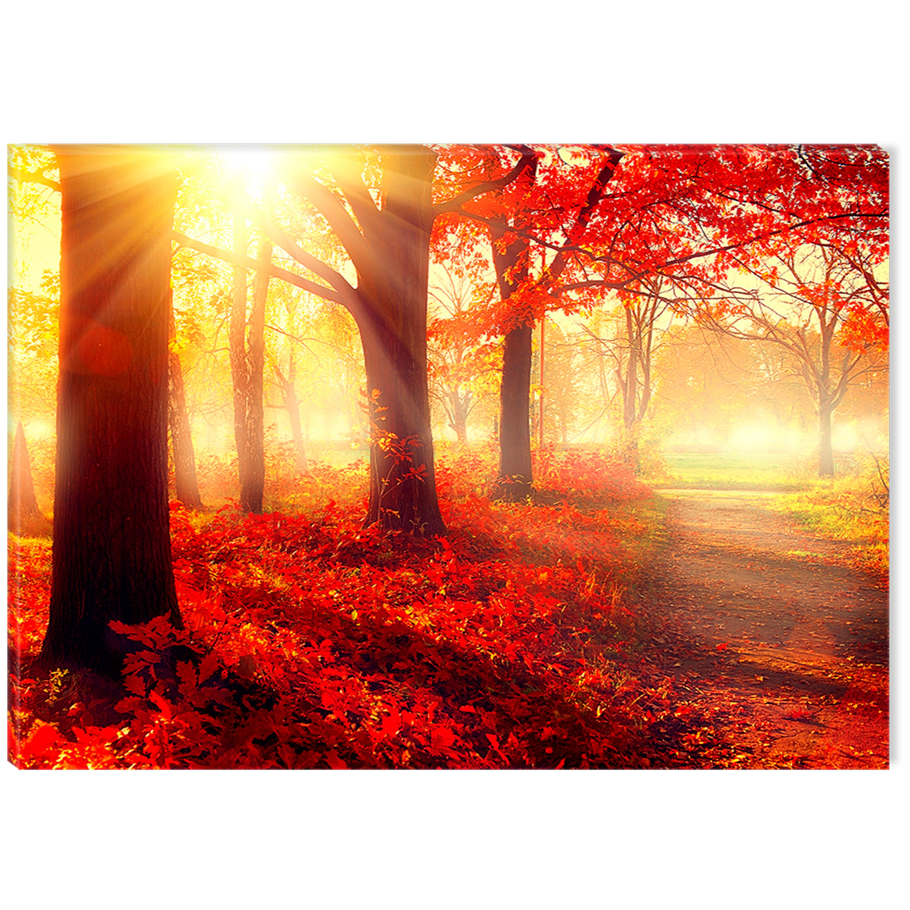 Startonight Canvas Wall Art Red Morning in the Forest USA Design for Home Decor, Illuminated Nature Painting Modern Canvas Artwork Framed Ready to Hang Medium 23.62 X 35.43 inch