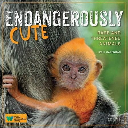 Endangerously Cute 2017 Calendar: Rare and Threatened Animals