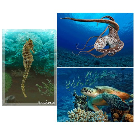 Greetings Postcards Package - SEALIFE creatures: 3 Lenticular 3D Postcard Greeting Cards -  Seahorse, Octopus and Turtle