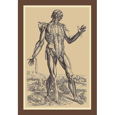 Andreas Vesalius Was An Anatomist Physician And Author Of One Of The