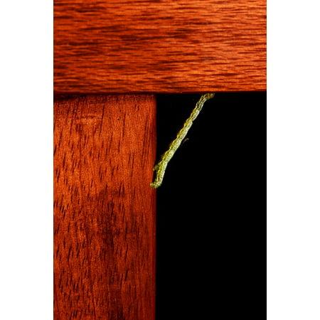 Wood Grained Laminate (Laminated Poster Inchworm Green Grain Reaching Wood Brown Larva Poster Print 11 x)