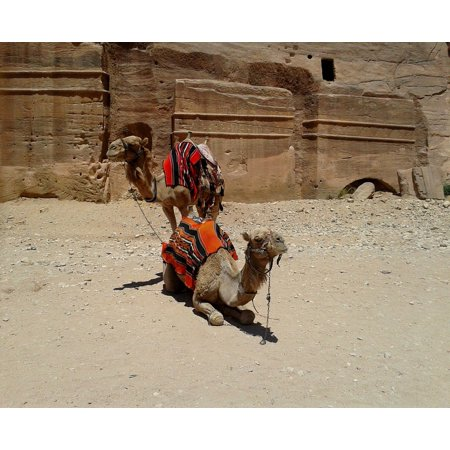 - LAMINATED POSTER Rock Colorful Saddle Desert Camel Pair Blanket Poster Print 24 x 36