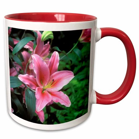 3dRose New York Botanical Gardens, Oriental Lily, Bronx. - Two Tone Red Mug, 11-ounce