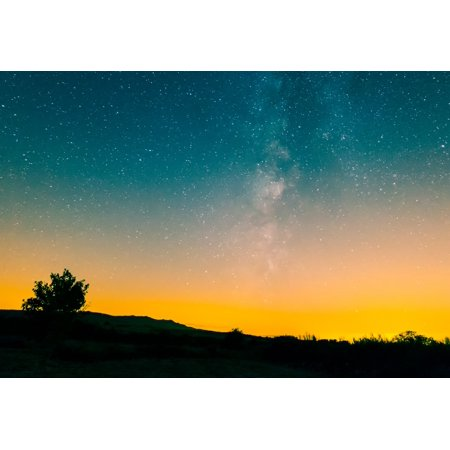 Sunset Tree Night Sky Outdoor Wall Photography Artwork Skyline Poster ()