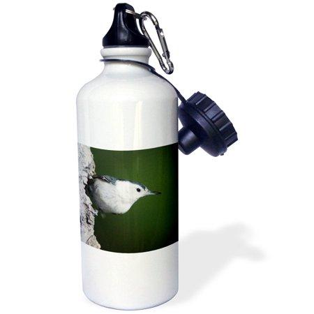 3dRose White-breasted Nuthatch bird, Rocky Mountain NP - NA02 RNU0826 - Rolf Nussbaumer, Sports Water Bottle, 21oz