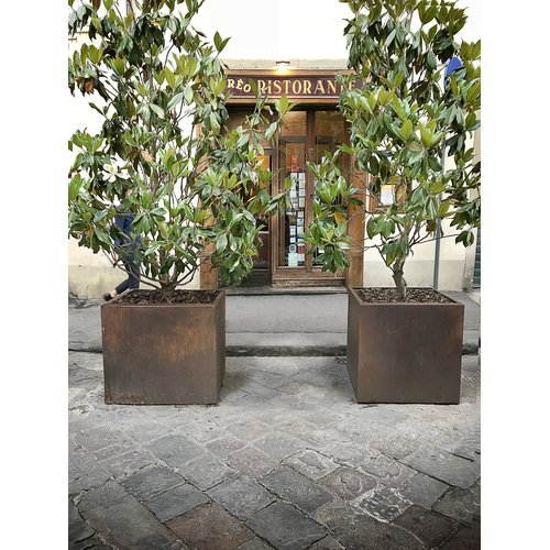 Bloomsbury Market Austintown Cube Raw Corten Steel Planter Box