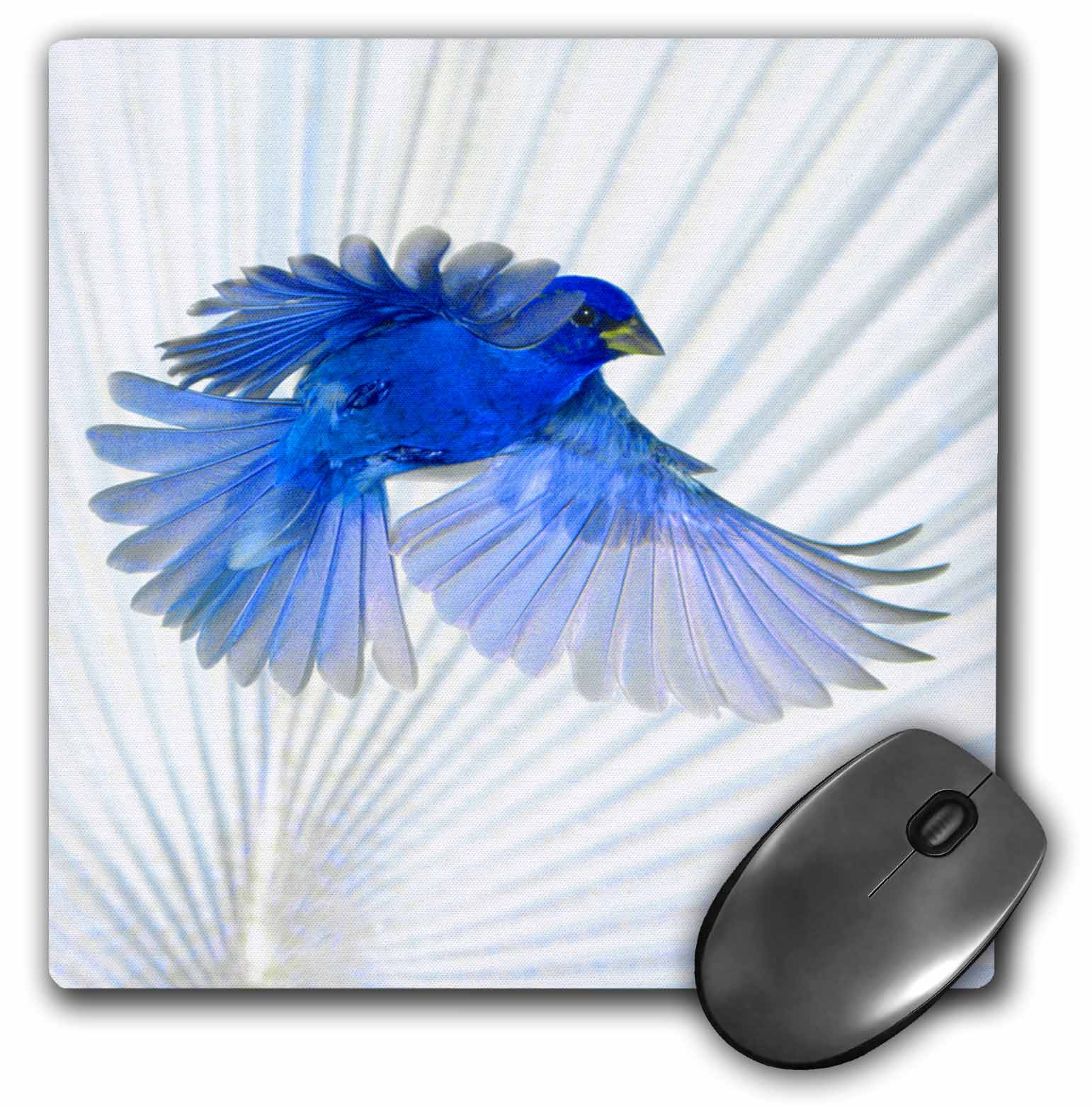 3dRose Florida, Immokalee, Indigo Bunting bird - US10 BFR0117 - Bernard Friel, Mouse Pad, 8 by 8 inches