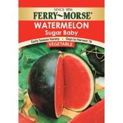 Ferry Morse Fm Foil Watermelon Sugar Baby