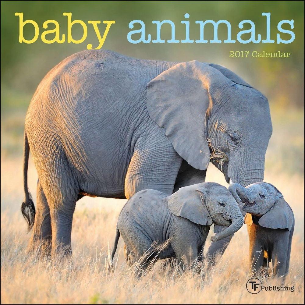 Baby Animals Mini Wall Calendar