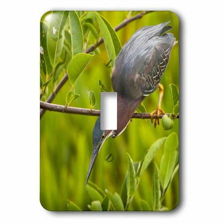3dRose USA Florida Green heron bird hunting US10 BJY0001 Jaynes Galler