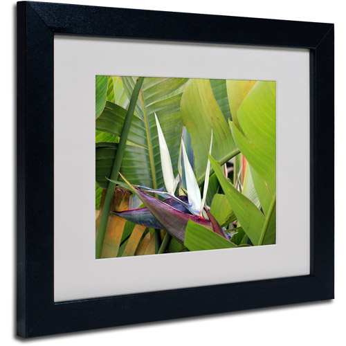 "Trademark Fine Art ""Paradise 2"" Matted Framed Art by Patty Tuggle, Black Frame"