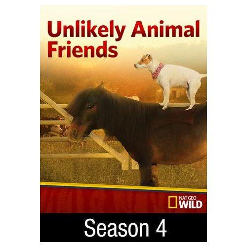Image of: Animal Friendships Imdb Unlikely Animal Friends Big Love season 4 Ep 1 2016 Walmartcom