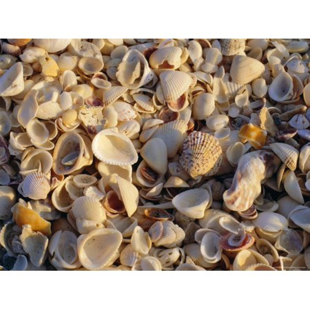 Sanibel Island, Famous for the Millions of Shells That Wash up on Its Beaches, Florida, USA Print Wall Art By Fraser
