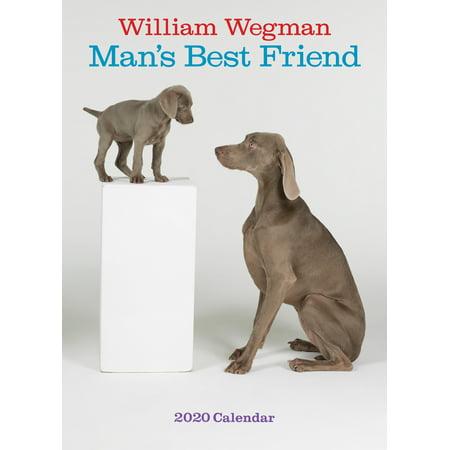 William Wegman Man's Best Friend 2020 Wall Calendar