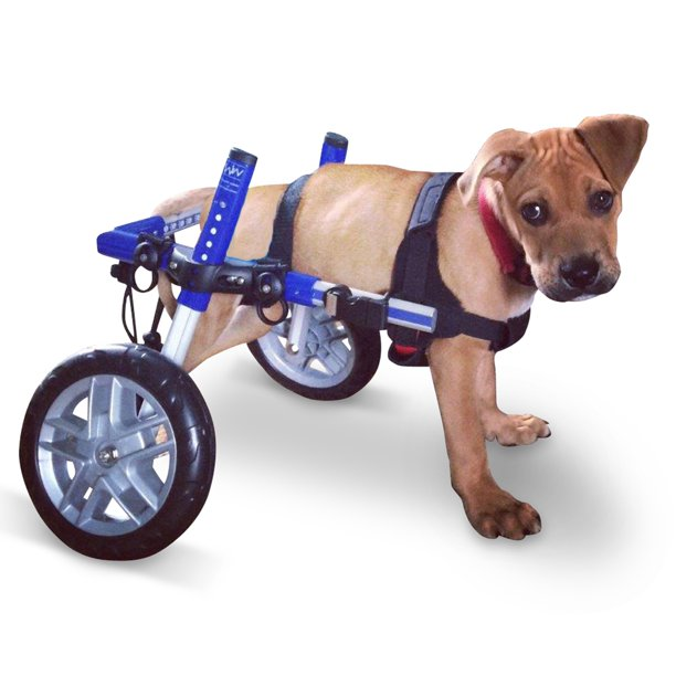 Blue Dog Wheelchair - for Small Dogs 11-25 Pounds - Veterinarian Approved - Dog Wheelchair for Back Legs