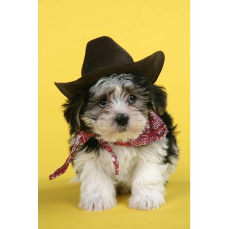 Lhasa Apso Cross Puppy (7 Weeks Old) in Cowboy Outfit Print Wall Art
