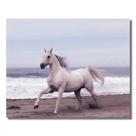White Horse Running On Sand Ocean Beach #2 Photo Wall Picture 8x10 Art