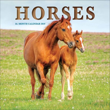 2019 Horses Mini Wall Calendar, by Vista Stationery & Print