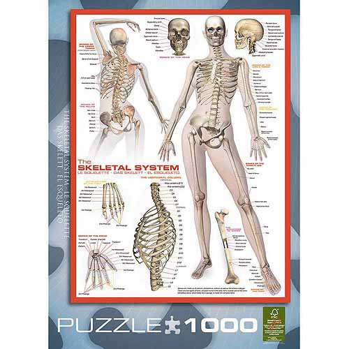 """EuroGraphics Skeletal System """"Human Body"""" 1000-Piece Puzzle"""