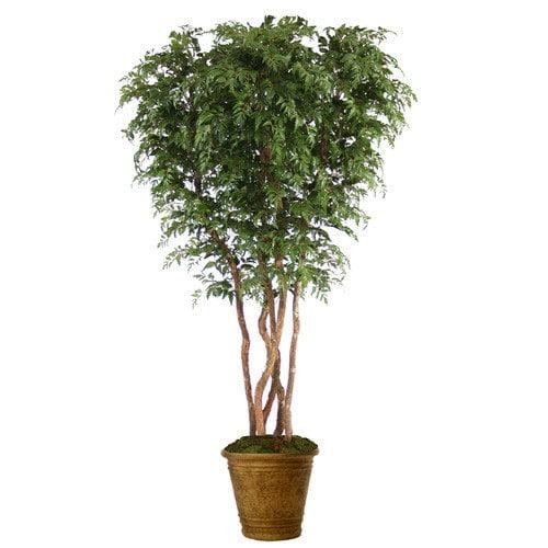 Distinctive Designs Ming Aralia Tree in Pot