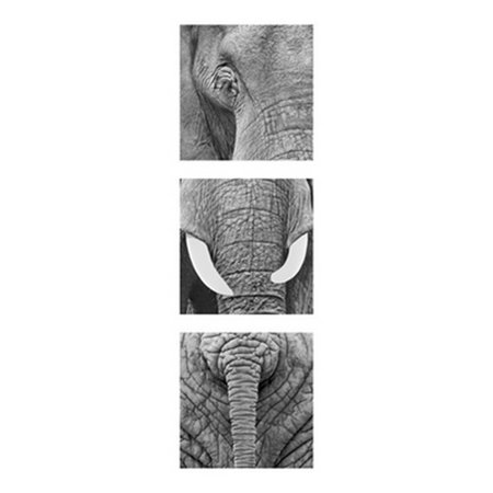 Elephants Poster Print By Rocco Sette  13 X 37