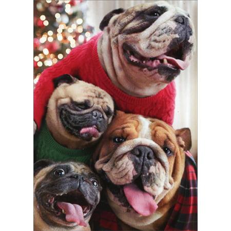 Avanti Press Dogs In Christmas Sweaters Box of 10 Funny / Humorous Bulldog and Pug Christmas