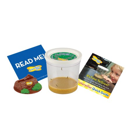 Insect Lure - Insect Lore Cup of Live Caterpillars with Deluxe Chrysalis Station log