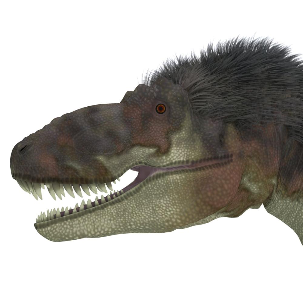 29 Best Corey Reagan Interiors Images On Pinterest: Daspletosaurus Dinosaur Head Canvas Art