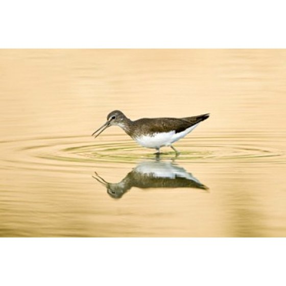 Cool Sandpiper Birds Wall Decor Pictures Inspiration - Wall Art ...
