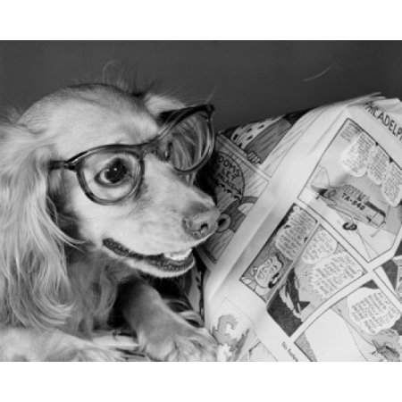 Close up of dog wearing glasses and reading comics Canvas Art - (18 x 24)