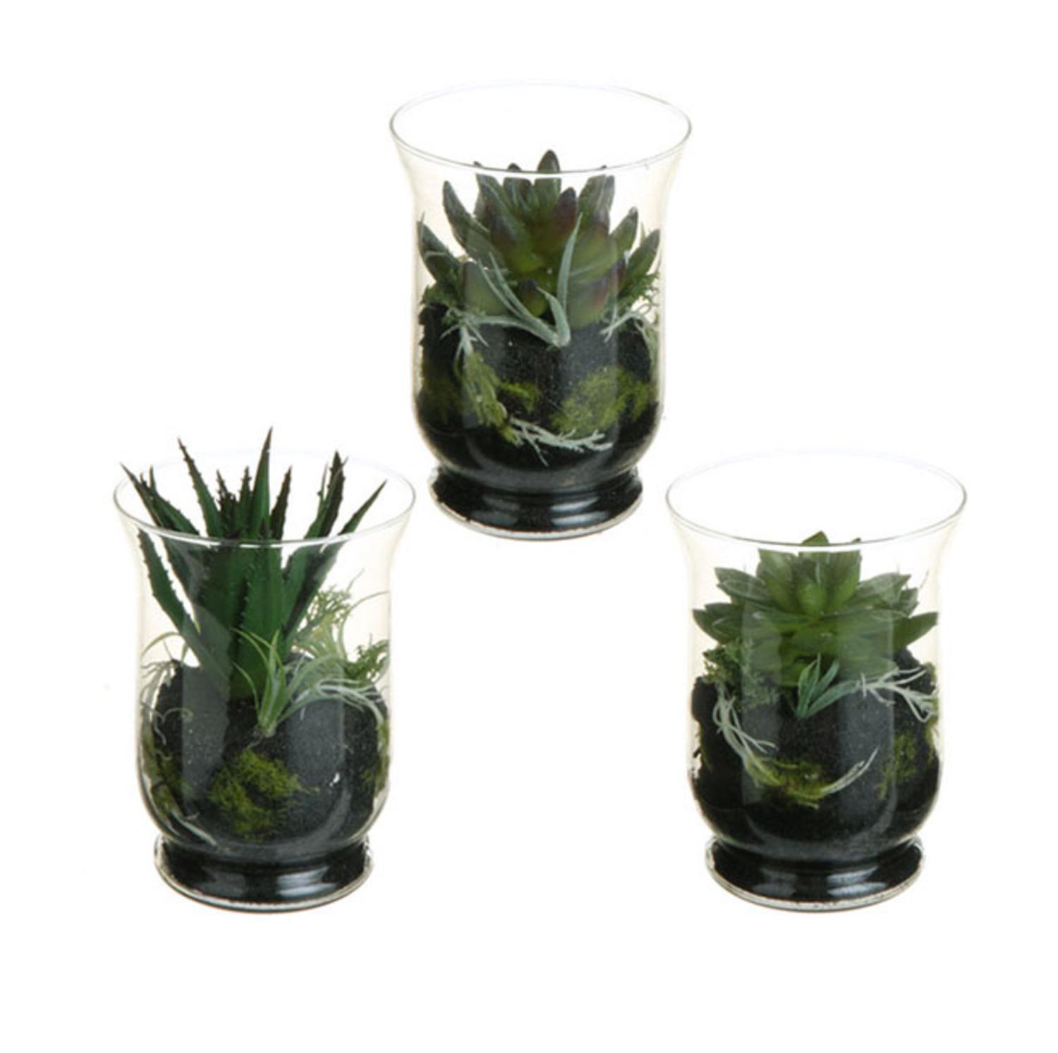Set of 3 Southwestern Mixed Artificial Cactus and Succulent Plant Terrariums 6""