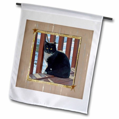 3dRose Bright Eyed Black and White Kitten Standing on Patio in Frame with Stars - Garden Flag, 12 by (Flag With Stars And Black And White Stripes)