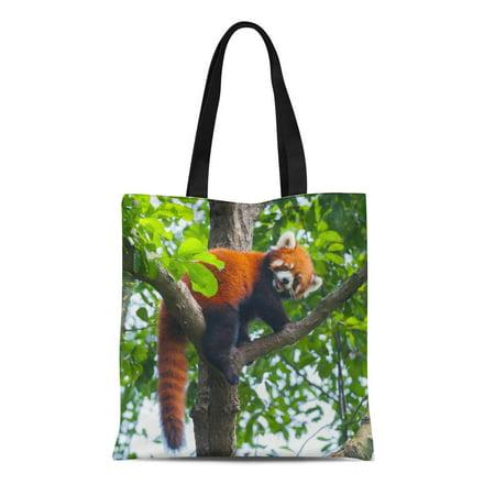 LADDKE Canvas Tote Bag Colorful Bhutan Red Panda Bear Climbing Tree Green Tail Reusable Shoulder Grocery Shopping Bags