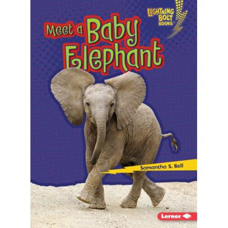 Meet a Baby Elephant - Meet The Baby Party