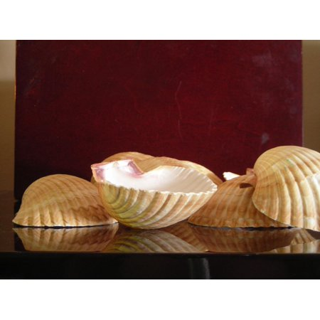 - Set of 3 Mexican Deep Scallops 2 1/2-3