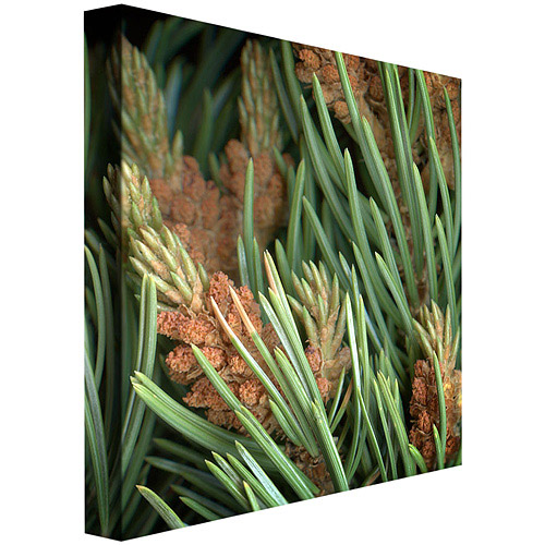 "Trademark Fine Art ""Pinion"" Canvas Art by AIANA"