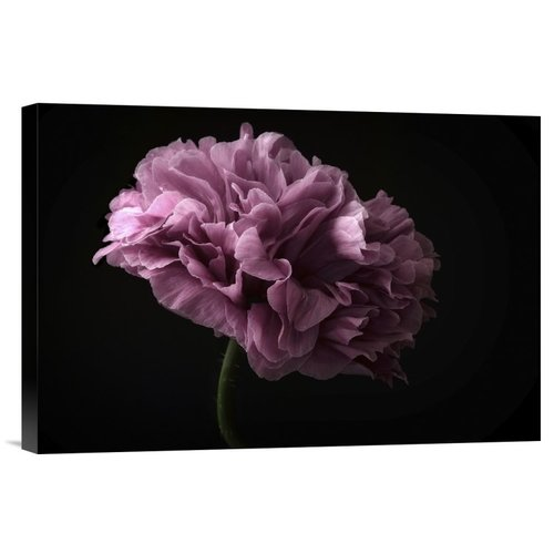Global Gallery 'Poppy' by Lotte Gronkjaer Photographic Print on Wrapped Canvas