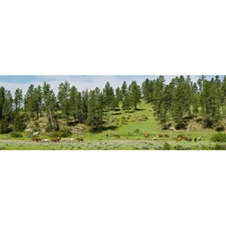 Images panoramiques PPI141397L Chevaux sur rafle Billings Montana USA copie d'affiche par images panoramiques - 36 x 12 - image 1 de 1