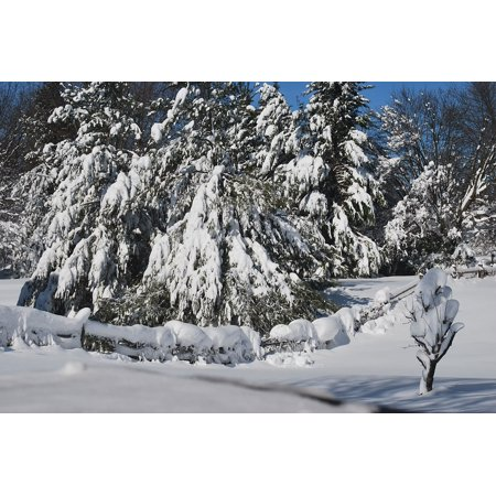 LAMINATED POSTER Drift Evergreens Cover Trees Snow Drifting Poster Print 24 x