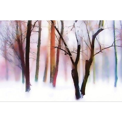 "Portfolio Canvas Decor ""Winter Wonderland"" by Jessica Jenney Wrapped and Stretched Canvas"