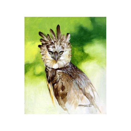 Harpy Eagle Print Wall Art By Spencer (Eagle Art Print)