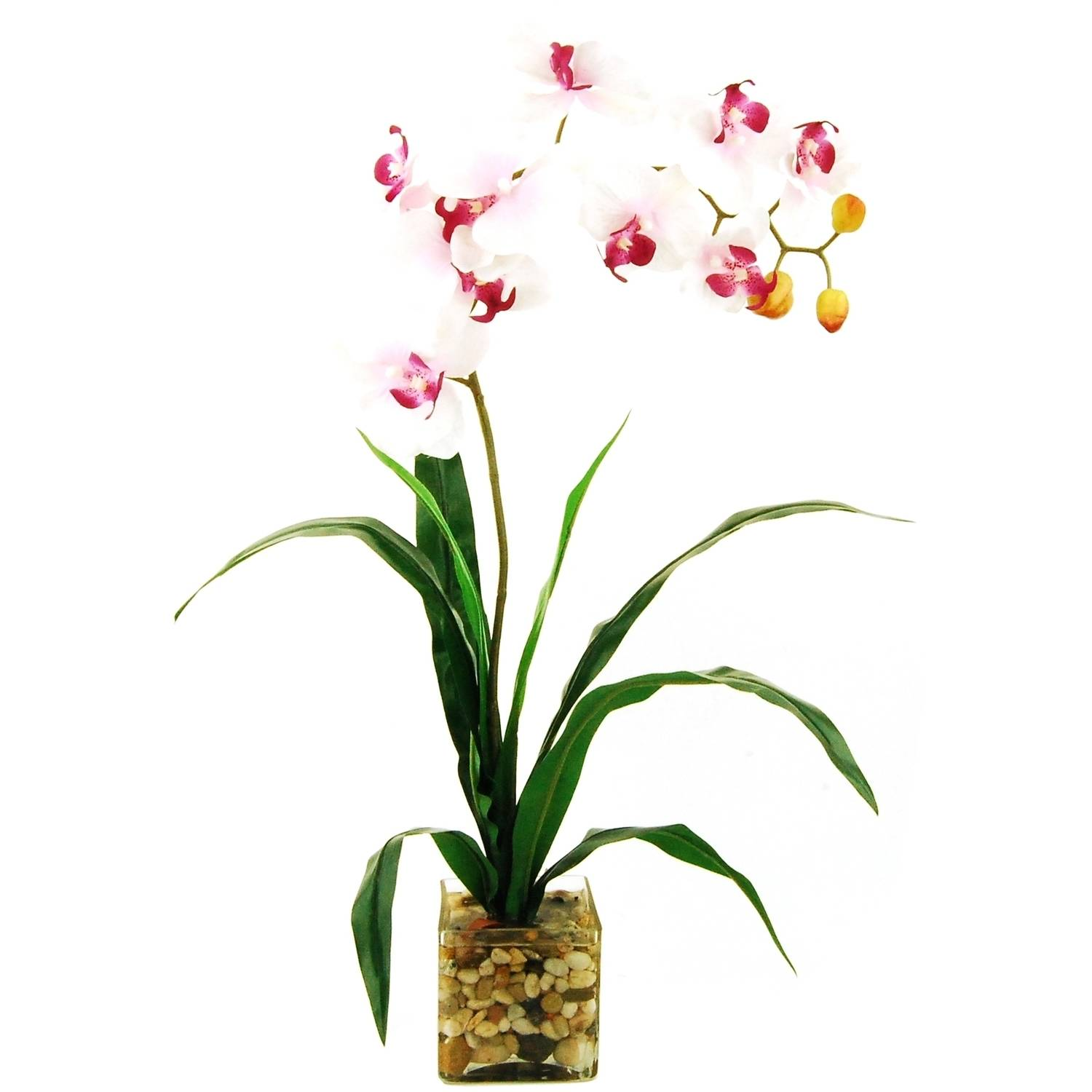 """24"""" Artificial Phalaenopsis Orchid in a Clear Glass Cube with River Rocks and Acrylic Water"""