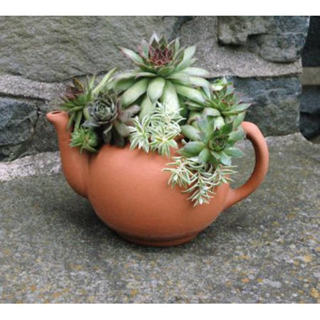 Brand New TPOTXL-3 -extra large english teapot planter-new size! One Only - Teapot Planter